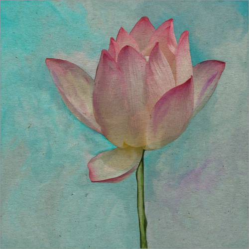 Wall sticker Pink Lotus on Turquoise Blue