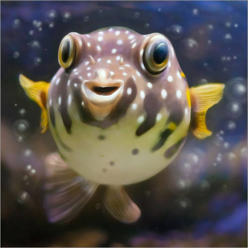 Wall sticker fugu the bowlfish