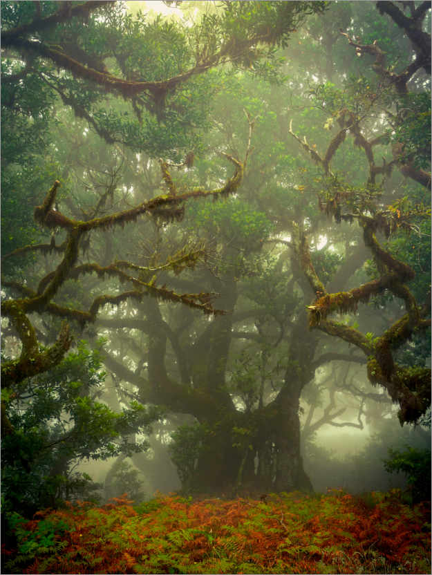 Premium poster Gnarled branches in the fairytale forest