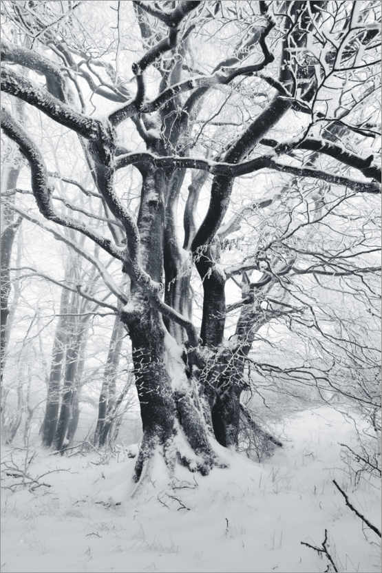 Premium poster Mystic tree in frost and snow