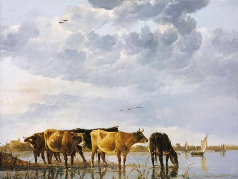 Premium poster Cows in a river