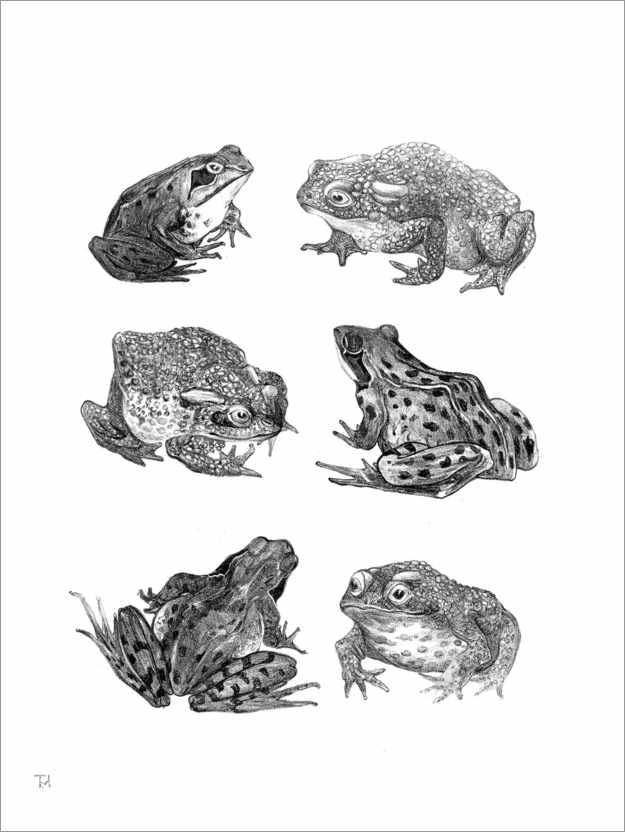 Premium poster Frogs and Toads