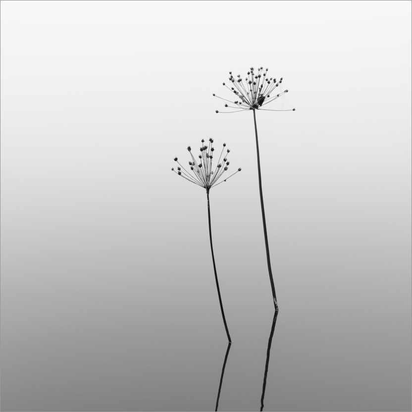 Premium poster Melancholy - flowers in the water