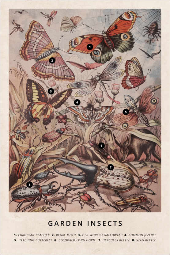 Premium poster Garden Insects