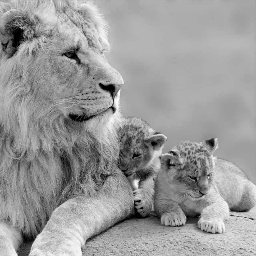 Wall sticker Young Lions in Black and White