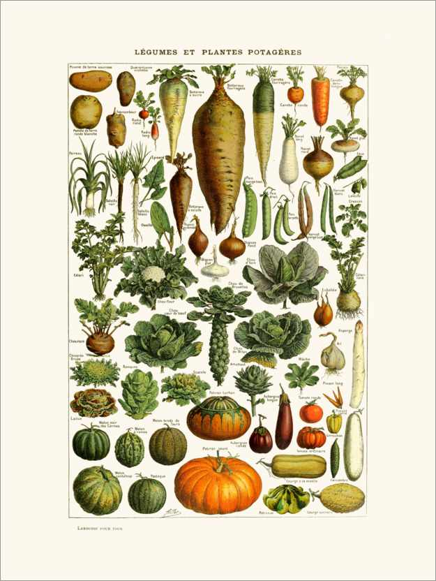 Premium poster Antique vegetable plate in French