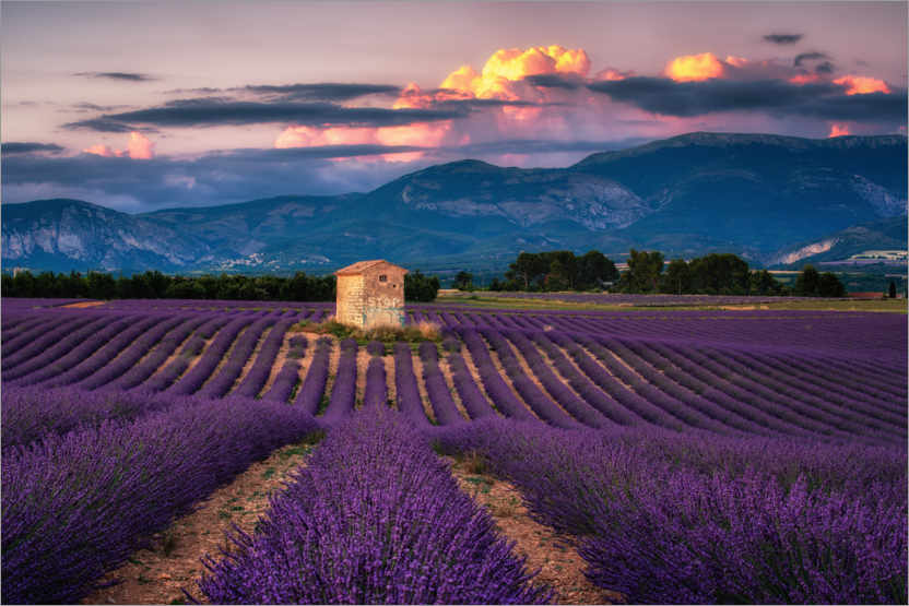 Premium poster Evening mood in Provence