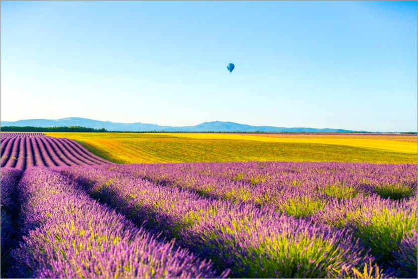 Premium poster Lavender fields near Valensole in southern France