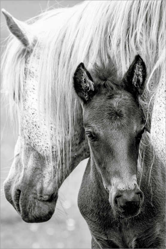 Premium poster Mother with foal