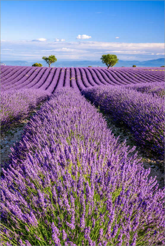 Premium poster Summer in Provence