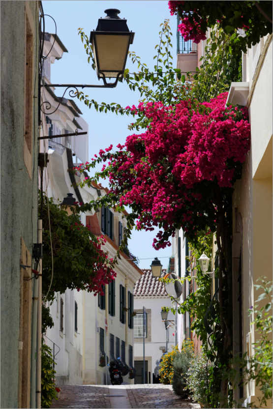 Premium poster Small alley with blooming red bougainvillea
