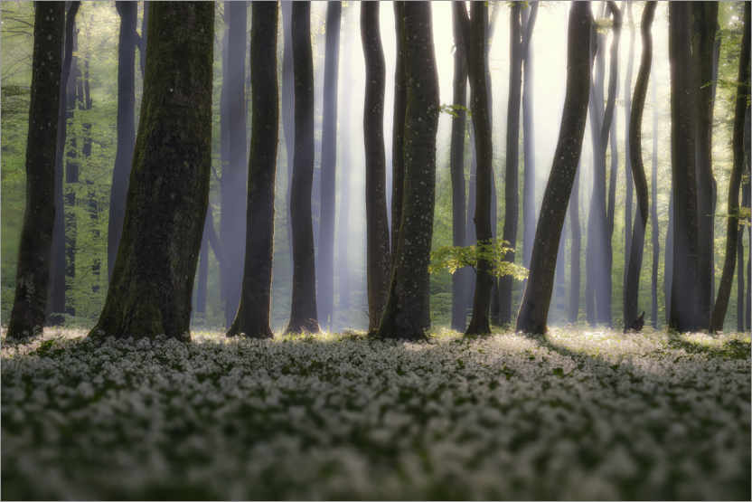 Premium poster Forest Guard I