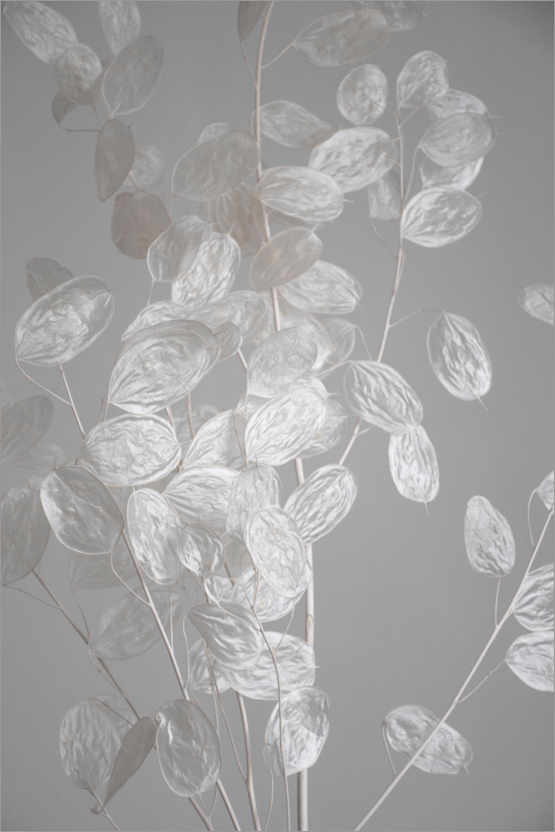 Premium poster Silver leaf - branch of dried plant