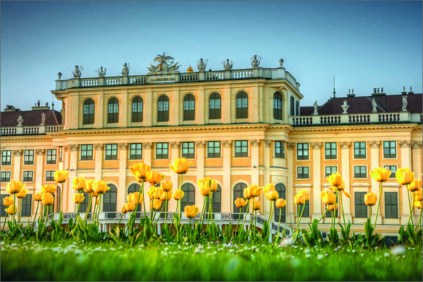Premium poster Tulips in front of Schönbrunn Palace