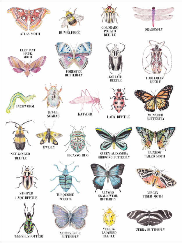 Premium poster Insects ABC