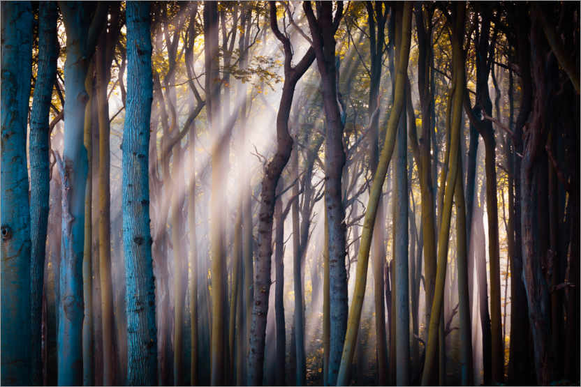 Premium poster Forest in the morning