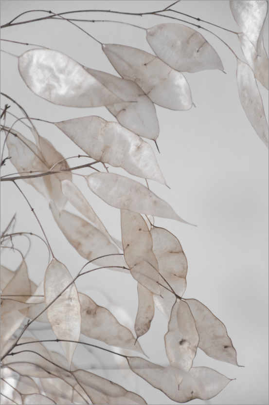 Premium poster Abstract branches - collection from the forest in beige & white