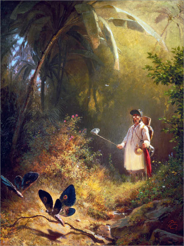 Premium poster The Butterfly Hunter