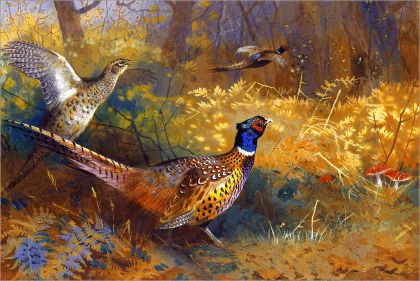 Premium poster Two pheasants on the edge of the forest