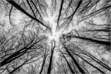 Acrylic print  In the Forest - Ramdan Rashid
