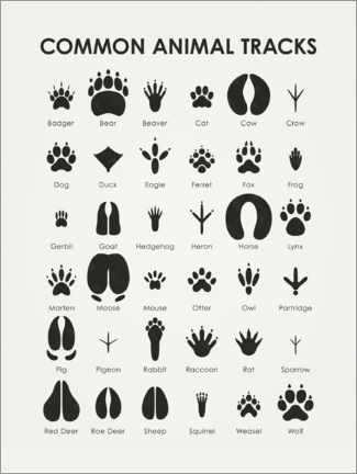 Premium poster  Common animal tracks - Iris Luckhaus