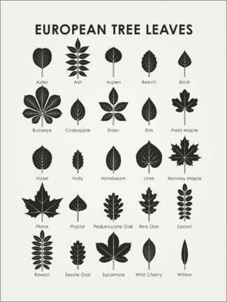 Premium poster  European tree leaves - Iris Luckhaus