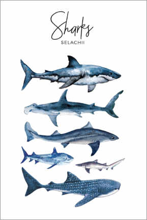 Premium poster  Sharks - Art Couture
