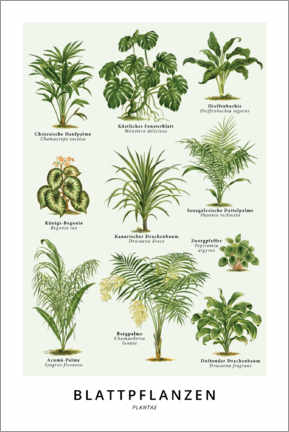 Acrylic print  Foliage plants (German) - Wunderkammer Collection