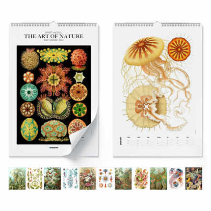 Wall calendar  Ernst Haeckel, The Art Of Nature 2021 - Ernst Haeckel