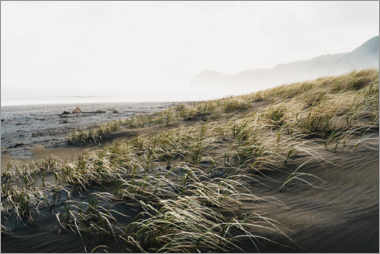 Aluminium print  Black sand beach in New Zealand - Igor Kondler