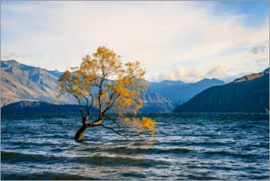 Wall sticker  Lonely tree in New Zealand in autumn - Igor Kondler