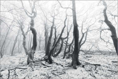 Acrylic print  Mystical forest in the snow and fog - Sven Müller