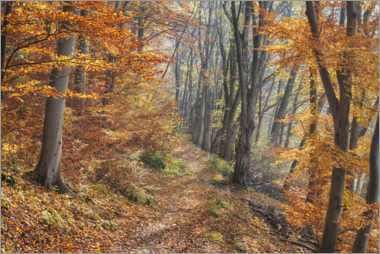 Premium poster  Forest path in late autumn - The Wandering Soul