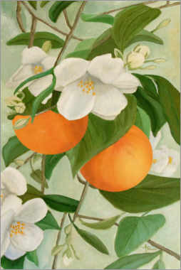 Gallery print  Branch of the orange tree - Ángeles M. Pomata
