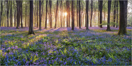 Acrylic print  Sea of flowers in the fairytale forest - Sven Müller