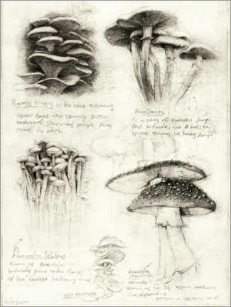Premium poster  Mushrooms - Mike Koubou