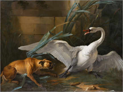 Foam board print  Swan attacked by a dog - Jean-Baptiste Oudry
