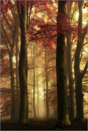 Premium poster  Forest on an autumn morning - Martin Podt