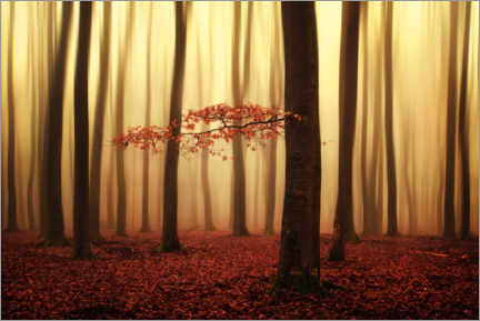 Premium poster Magical autumn morning