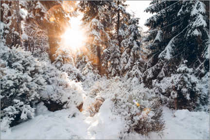 Premium poster Snowy winter woods with sun