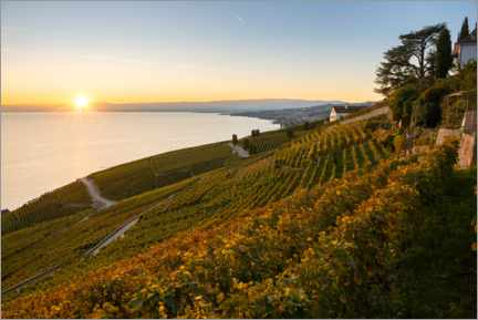 Premium poster Vineyards on Lake Geneva in the sunset