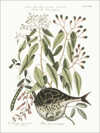 Premium poster  Puffer fish and bean plant - Wunderkammer Collection