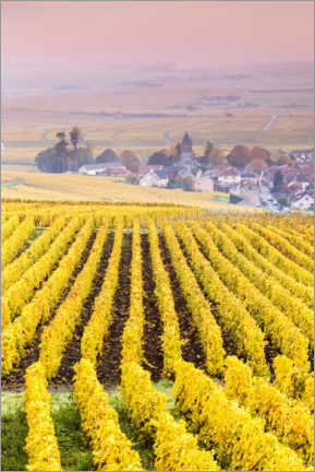 Premium poster  Vineyards in Champagne, France - Matteo Colombo