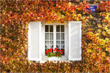Wood print  Window with vines, France - Matteo Colombo