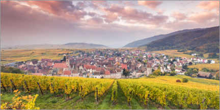 Premium poster  Vineyards in Alsace, France - Matteo Colombo