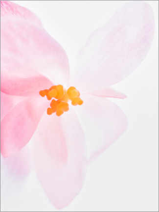 Premium poster  Pink orchid I - Magda Izzard