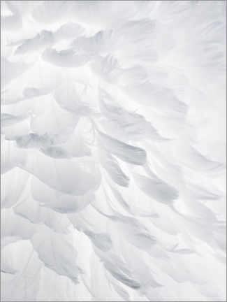 Canvas print  Feathers I - Magda Izzard