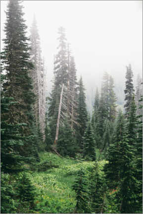 Premium poster Fog in the coniferous forest