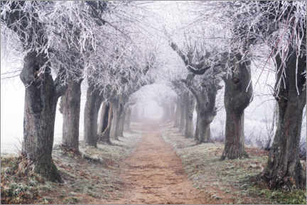 Canvas print  Linden avenue in the fog and hoarfrost - The Wandering Soul