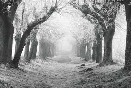 Canvas print  Linden avenue on a winter morning - The Wandering Soul